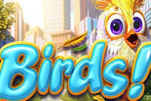 Birds sanasto